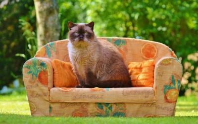 Wie man Katzenhaare vom Stoffsofa entfernt